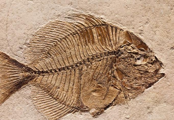 fakta unik fosil